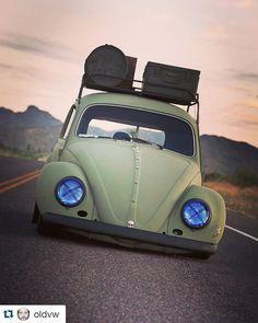 Troy Beetles