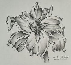 Lily Tjon