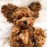 Remi Bear