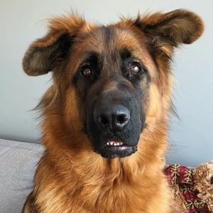 Zeus Shepherd