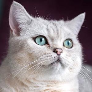 Nuri the Cat