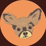 Chewie the Chi