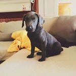 Zan The Pup
