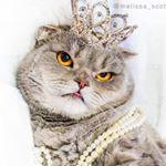 Melissa the Einstein Cat
